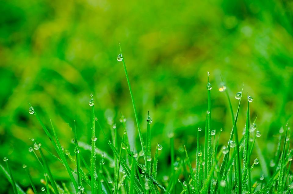 5 efektivních způsobů, jak držet klíšťata dál od vaší zahrady